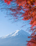 Red maple leaves mount Fuji Royalty Free Stock Photography