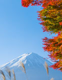 Red maple leaves mount Fuji Royalty Free Stock Images