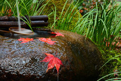 Red Maple Leaves On A Tsukubai Washbasin During Fall At A Temple In Japan Royalty Free Stock Photos