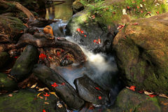 Red maple leaves on Phu Kradueng waterfall Stock Images