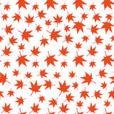 Red maple leaves seamless pattern. Japanese red maple pattern isolated on white. Falling leaves vector illustration