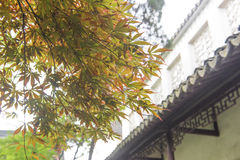 Red maple leaves and traditional architecture Stock Image