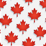 Red maple leaves wallpaper. Royalty Free Stock Images