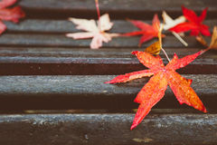 Red maple leaves on wooden bench Royalty Free Stock Image