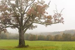 Red Maple Misty Mountains royalty free stock photos