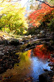 Red maple and stream Stock Photography