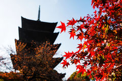 Red maple with Toji temple, Kyoto. Autumn Red maple with Toji temple background in Kyoto, Japan Stock Photography