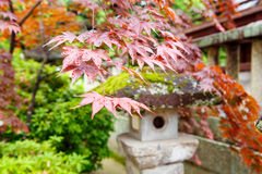 Red maple and traditional temple lantern in Japan Stock Photo