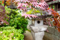 Red maple and traditional temple lantern in Japan. Ese style garden in Japan Stock Photography
