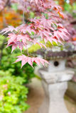 Red maple and traditional temple lantern in Japan Royalty Free Stock Photography