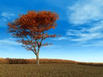 Red Maple Tree. Singe red maple tree against autumn golden wheat field 3d render Stock Images