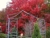 Red Maple Tree Pagoda Garden. Autumn Tree Pagoda Garden in the Appalachian Mountains Stock Photo