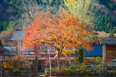 Maple leaves on Traditional gassho-zukuri house background. In Shirakawa-go,Japan royalty free stock photography