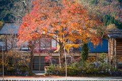 Maple leaves on Traditional gassho-zukuri house background. In Shirakawa-go,Japan royalty free stock image