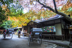 Red maple trees in a japanese garden. Kyoto, Japan - June 30, 2014: Red maple trees in a japanese garden Stock Images