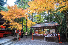 Red maple trees in a japanese garden. Kyoto, Japan - June 30, 2014: Red maple trees in a japanese garden Royalty Free Stock Photography