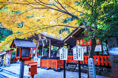 Red maple trees in a japanese garden Stock Photos