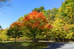 Red maple trees leaves at Saint-Bruno Park. Saint-Bruno Park, near Montreal, has many maple trees along the trails and many beautiful colours to admire during stock images