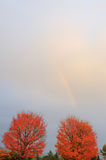 Red maple trees and rainbow Stock Photos