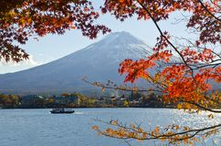 Red Maple in Mt.Fuji. Royalty Free Stock Images