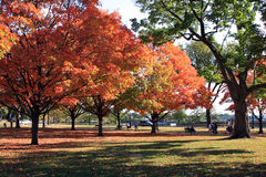 Red maples on the Washington mall. Washington DC, USA Stock Photo