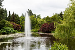 Red Maples and Weeping Willows Around Lake Fountain Royalty Free Stock Images