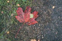 Red mapple leave on asphalt - vintage film look. Red mapple leave on asphalt. natural environmental detail view in latvia - vintage film look stock photos