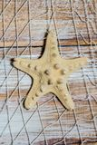 Red marina con las estrellas de mar en la pared Imagen de archivo libre de regalías