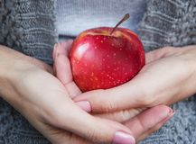 Red mature juicy apple in female hands. royalty free stock images