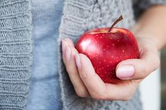 Red mature juicy apple in female hands. stock images