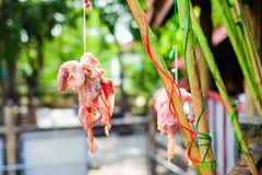 Red meat chicken skeleton hang on green bamboo for animal. Royalty Free Stock Photography