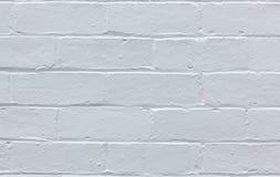 red med den vita skarven Royaltyfri Bild