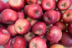 Red medium-sized apples Jonathan cultivar from above royalty free stock image