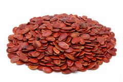 Red melon seeds Stock Images