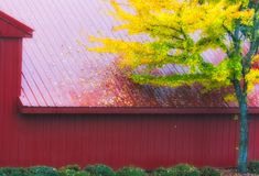 Red Barn and Autumn colored leaves Royalty Free Stock Photo