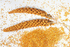 Red millet on silver-gray background Royalty Free Stock Image