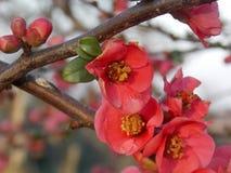 Red mini flower. Focused mini red flower Royalty Free Stock Image