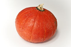 Red mini pumpkin Stock Image