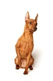 Red Miniature Pinscher on white background. Red Miniature Pinscher isolated on white background Royalty Free Stock Image