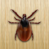 Red mite. Mite allergy. Epidemic. Mite parasites. On a wooden background. illustration Royalty Free Stock Photography