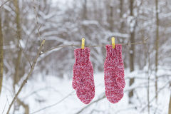 Red mittens on clothespins. In the forest Royalty Free Stock Photo