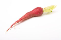 Red mooli Royalty Free Stock Image