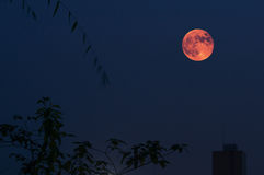 Red Moon in Lunar Eclipse Royalty Free Stock Photography