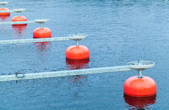 Red mooring buoys in a row floating on water Royalty Free Stock Photo