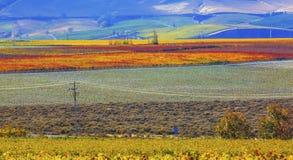 Free Red Mountain Autumn Colorful Vineyards Benton City Washington Stock Image - 62424521