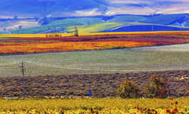 Red Mountain Autumn Colorful Vineyards Benton City Washington Royalty Free Stock Photography