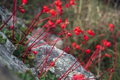 Red mountain flowers stock photos
