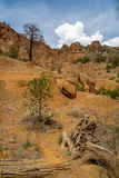 Red Mountain landscapes in Northern Arizona. Hiking the Red Mountain trail in Northern Arizona Stock Image