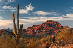 Red Mountain and Saguaro Cactus Royalty Free Stock Photo