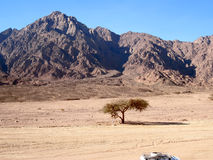 Red mountain on Sinai. Royalty Free Stock Image
